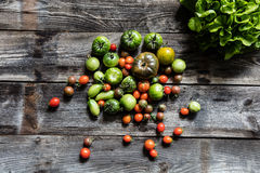 Still-life for genuine gardening or healthy diet, flat lay. Still-life of different green and red tomatoes and salad on rustic wooden background for organic Royalty Free Stock Photography