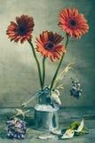 Still-life gerbera Stock Photo