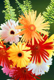 Still life with gerberas Royalty Free Stock Images