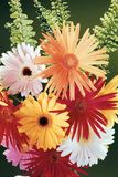 Still life with gerberas Royalty Free Stock Photos