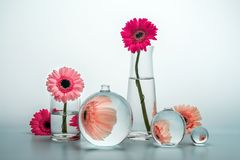 Still life with glass vases of various shapes and gerbera daisy Royalty Free Stock Image