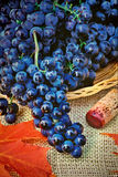 Still-life of grapes. Wine grapes in basket on table covered with burlap, Autumn scene Stock Photo