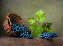 Still life with grapes on a basket. On the table Royalty Free Stock Photos