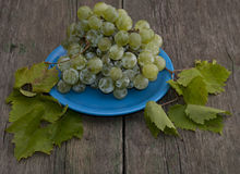 Still life grapes on a blue plate and branches of leaves Royalty Free Stock Photos