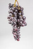 Still life of grapes stock photography