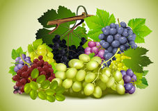 Still life of grapes Royalty Free Stock Image