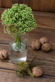 Still life with green flowers in a bottle and nuts Stock Photography