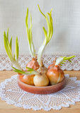 Still life with green onions. Stock Photography