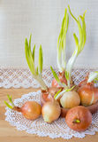 Still life with green onions. Royalty Free Stock Image