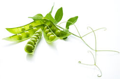 The still life from the green peas Stock Photography
