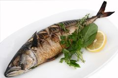 Grill mackerel on a white dish stock images