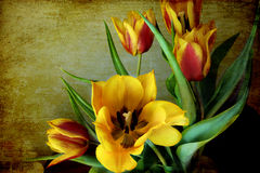 Still life, grunge red and yellow tulips. A bunch of red and yellow tulips on a grunge background royalty free stock images