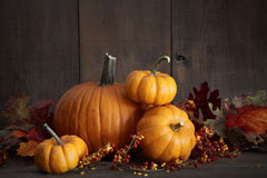 Still life harvest with pumpkins and gourds Royalty Free Stock Photo