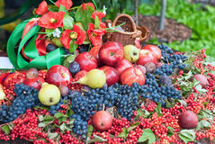 Still life and harvest or table Royalty Free Stock Image