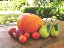 Still life Harvest vegetables on the wood table in the garden.Pumpkin, Apples, Pears, Tomatos Stock Photo