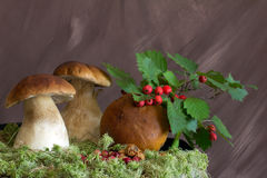 Still life hawthorn, cranberries and mushrooms Stock Photo
