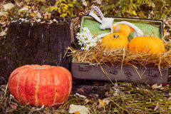 Still life with hay and pumpkins. Stock Photography