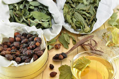 Still life with healing dried leaves and herbal tea Stock Images