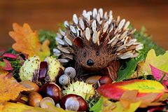Still Life, Hedgehog, Decoration Royalty Free Stock Images