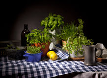 Still Life with herbs. Still-life with a variety of herbs in flower pots and watering cans royalty free stock photos