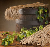Still life with hop cones and barley Royalty Free Stock Photography