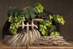 Still-life with hops Stock Photos