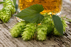 Still life with hops Royalty Free Stock Photos
