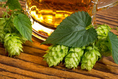 Still life with hops Stock Photography