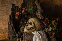 Still life with a human skull with desert plants, cactus, roses. And dried flowers in a vase beside the timber Royalty Free Stock Photos