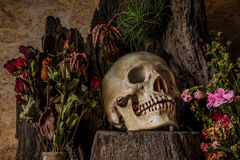Still life with a human skull with desert plants, cactus, roses Stock Photo