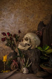 Still life with a human skull with desert plants, cactus, roses. And dried flowers in a vase beside the timber Royalty Free Stock Image