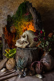 Still life with a human skull with desert plants, cactus, roses. And dried flowers in a vase beside the timber Royalty Free Stock Photo