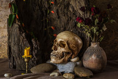 Still life with a human skull with desert plants, cactus, roses. And dried flowers in a vase beside the timber Royalty Free Stock Photography