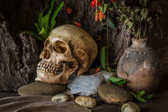 Still life with a human skull with desert plants, cactus, roses Royalty Free Stock Photo