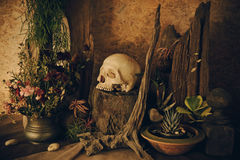 Still life with a human skull with desert plants, cactus, roses. And dried flowers in a vase beside the timber Stock Photo