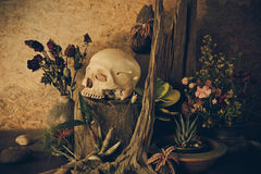 Still life with a human skull with desert plants, cactus, roses. And dried flowers in a vase beside the timber Stock Image