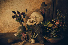Still life with a human skull with desert plants, cactus, roses. And dried flowers in a vase beside the timber Stock Images