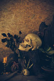 Still life with a human skull with desert plants, cactus, roses Stock Images