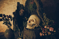 Still life with a human skull with desert plants, cactus, roses. And dried flowers in a vase beside the timber Royalty Free Stock Images