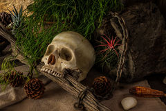 Still life with a human skull with desert plants. Stock Image
