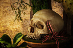 Still life with a human skull with desert plants. Royalty Free Stock Image