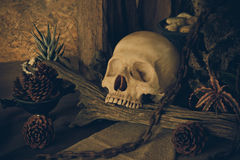 Still life with a human skull with desert plants. Stock Photo