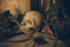 Still life with a human skull with desert plants. Royalty Free Stock Images