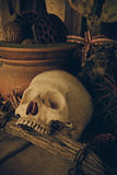 Still life with a human skull with desert plants. Stock Photography