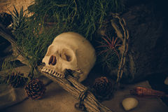 Still life with a human skull with desert plants. Royalty Free Stock Photography