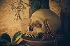 Still life with a human skull with desert plants. Stock Images