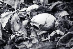 Still life,human skull on dry leaves stock image