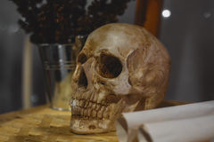 Still life with human skull. And flowers Royalty Free Stock Photo