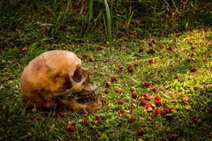 Still life with Human a skull on grass. Background stock photography
