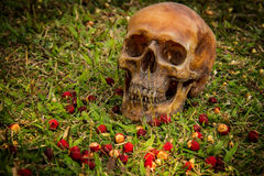 Still life with Human a skull on grass. Background stock images